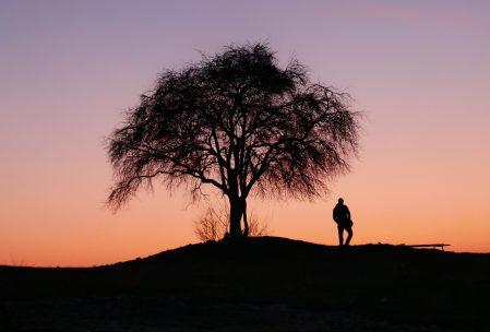 Puesta de sol con la silueta de un árbol y una persona.