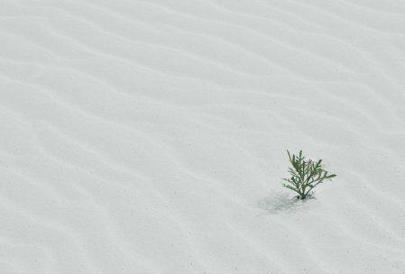 Planta que crece en la arena